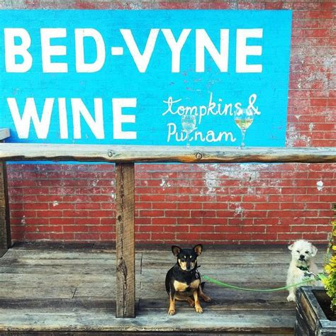 bed vyne 10 adorable bar dogs from across the country supercall