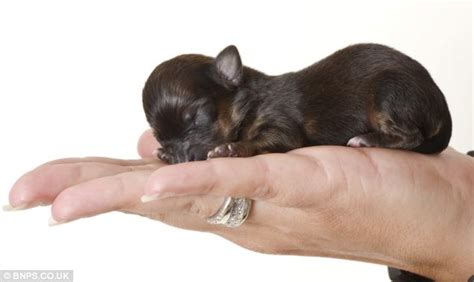 puppies that don t grow for sale why do dogs paws constantly puppies that don t grow for sale puppy