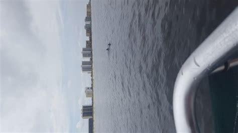 glass bottom boat tours alabama glass bottom dolphin tours orange beach what to know