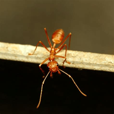 how to get rid of ants in the house how to get rid of ants in the yard how to get rid of stuff