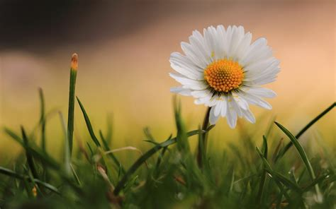 images of beautiful flowers beautiful flowers wallpapers 77