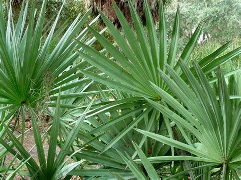 tropical plants florida tropical plants florida