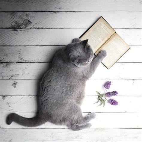 Cat And Books 17 best images about cats books on