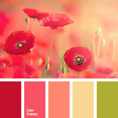 what color is poppy color of poppies color palette ideas