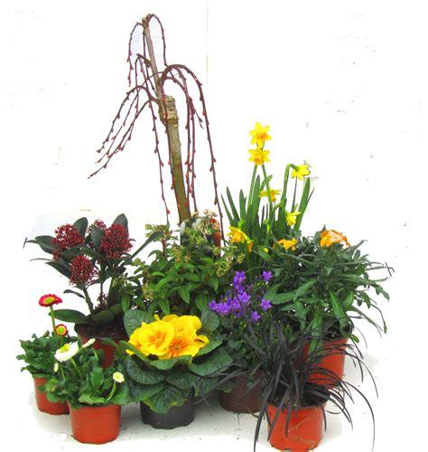 garten pflanzen versand pflanzen versand kataloge pflanzen garten katalog