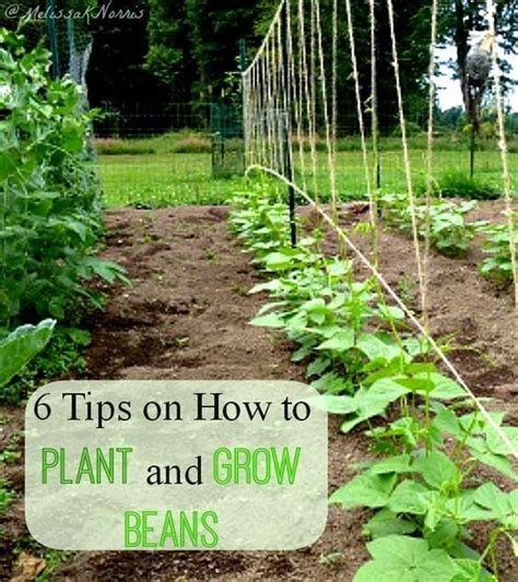 how many states grow trees beans plants and to grow on