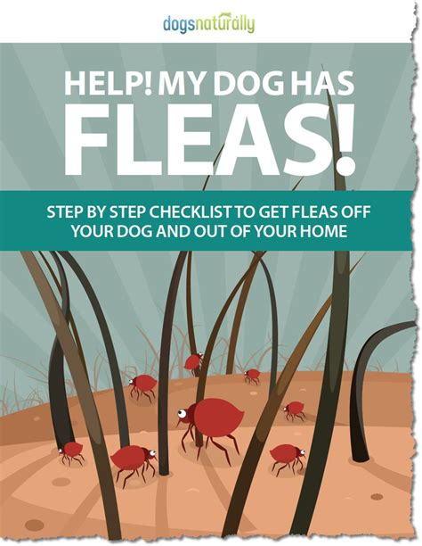 best 25 home remedies fleas ideas on flea