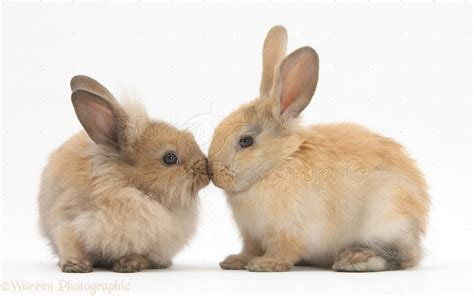 coding rabbit white rabbit wallpaper wallpapersafari