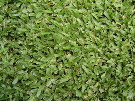 alfombra pasto cesped natural en alfombras c 233 sped grass pasto 60