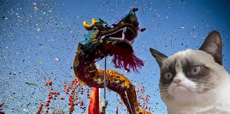 the year of the cat new year the story of new year and grumpy cat sort of