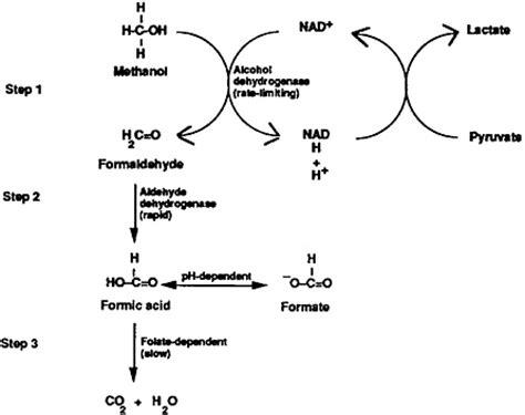 Methanol Blindness study 23 methanol toxicity environmental medicine integrating a missing element into