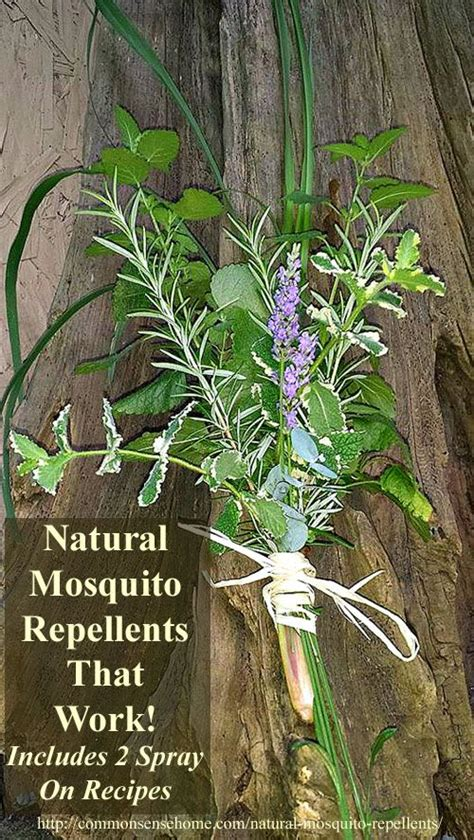 natural mosquito repellents best 25 natural mosquito repellant ideas on pinterest