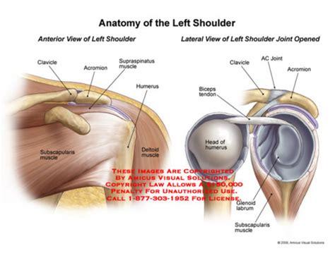 diagram of left shoulder left shoulder anatomy normal anatomy of the shoulder joint