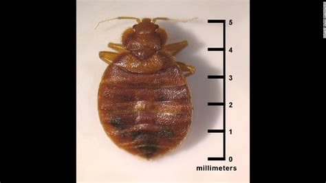 can bed bugs fly bedbugs have favorite colors too study finds cnn