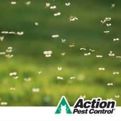 mosquito proof backyard how to mosquito proof your property