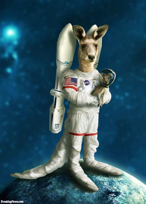in space kangaroo astronaut in space pictures freaking news