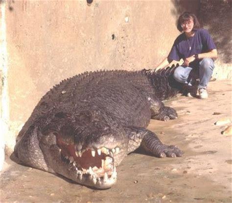crocodile biggest the world