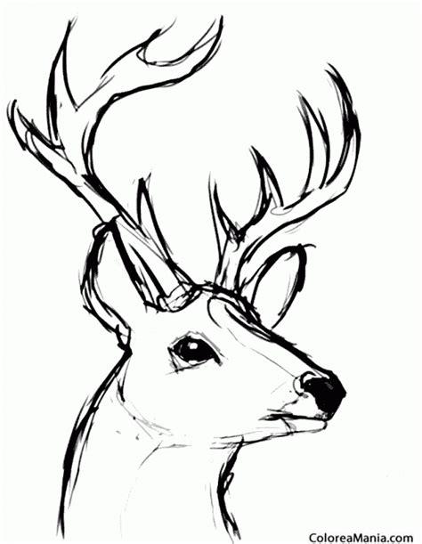 imagenes para colorear venado dibujos de ciervos para colorear best los amigos de bambi