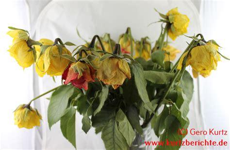 Glycerin Im Haushalt 5546 by Erfahrungsbericht Und Blumen Mit Glycerin Konservieren