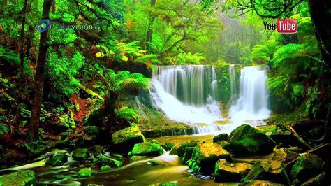 La Selva Tropical | image gallery selva tropical