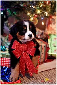 Christmas Trees Decorated In Red - 25 best ideas about christmas dog on pinterest dog
