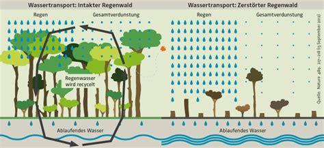 speisekammer temperatur amazonien abholzung