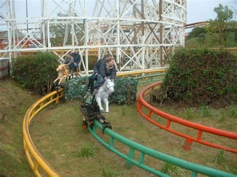 theme park hshire 9 best images about let me take you for a ride on