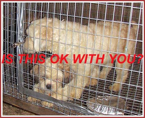 puppy mills in wisconsin the wisconsin puppy mill project what is a puppy mill and what does it to you