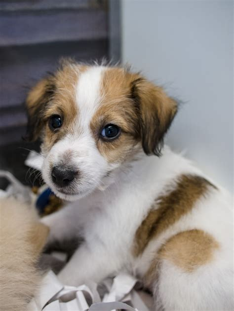 puppy danbury ct 7 puppies and kittens danbury ct in biological science picture directory