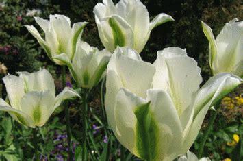 Bunga Pemikiran Keislaman kedamaian hati dalam iman senyumku dakwahku