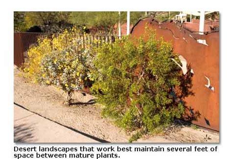 desert landscape plants desert plants for landscaping desertusa