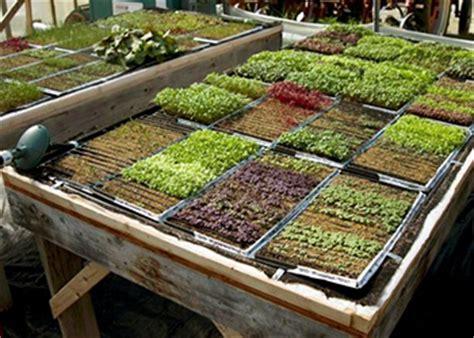 year  microgreens production  profit johnnys