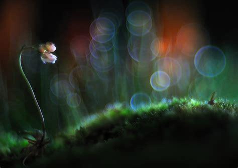 sei un piccolo fiore per me fiori e piante by bonali giuseppe juzaphoto