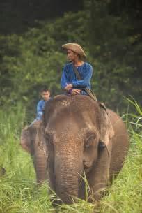 Elephant Gajah Display high quality stock photos of quot elephants quot