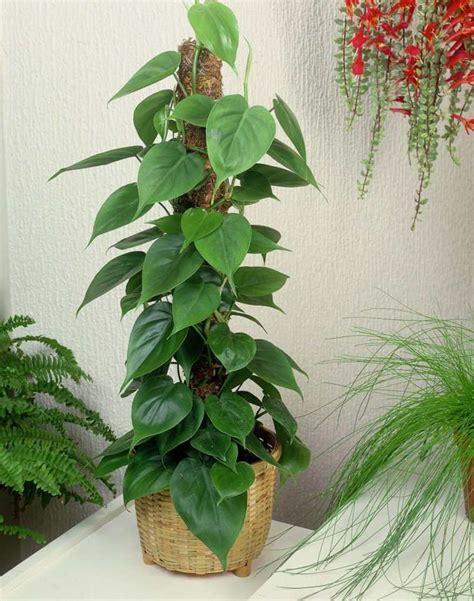 Plante D Intérieur Porte Bonheur by Plantes Vertes D Int 233 Rieur La Nature Dans Notre Quotidien