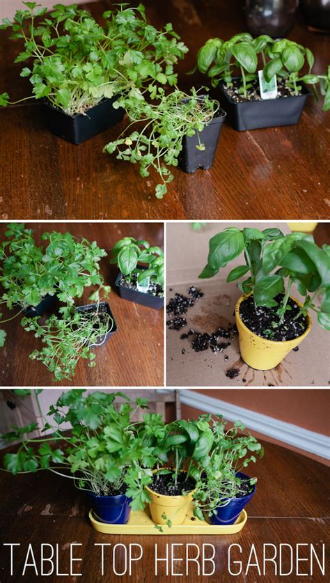 table top herb garden mini project table top herb garden liveit loveit blogit