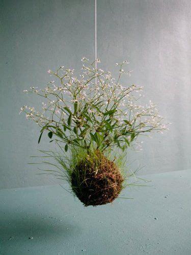 Hangende Planten Binnen by 25 Beste Idee 235 N Hangplanten Op