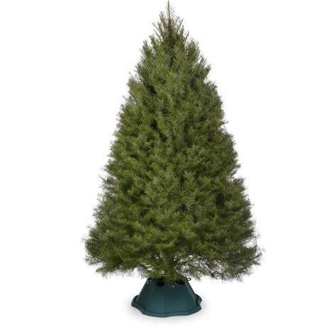 lowes in roseburg or for fresh x mas trees 7 8 ft douglas fir real tree at lowes
