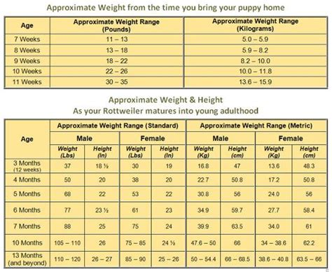 rottweiler growth chart rottweiler growth chart what to expect as your rottie grows up