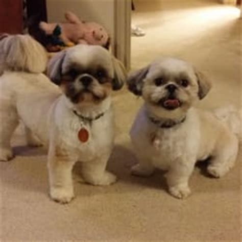 haircuts for dogs in andrews texas lucky dog grooming 19 foto toletta per animali