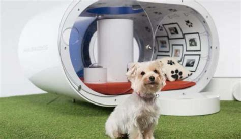 pet technology what future pet technology every dog owner will want