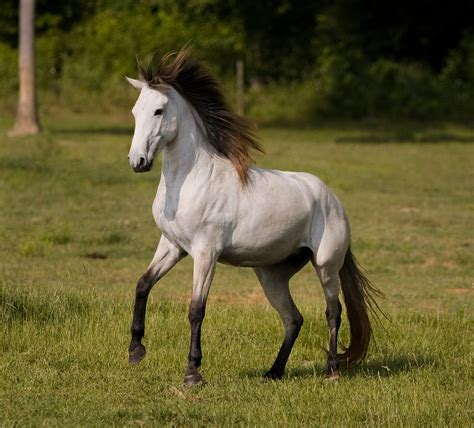 Horses Matting mate search engine at search