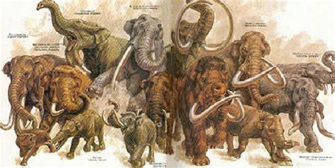 Water For Elephants Air Untuk Gajah By Gruen evolusi gajah dari dulu sai sekarang artikel