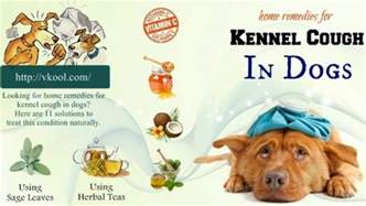 kennel cough home remedies home remedies for better health and cure your problems