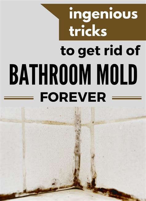 25 best ideas about bathroom mold on mold in