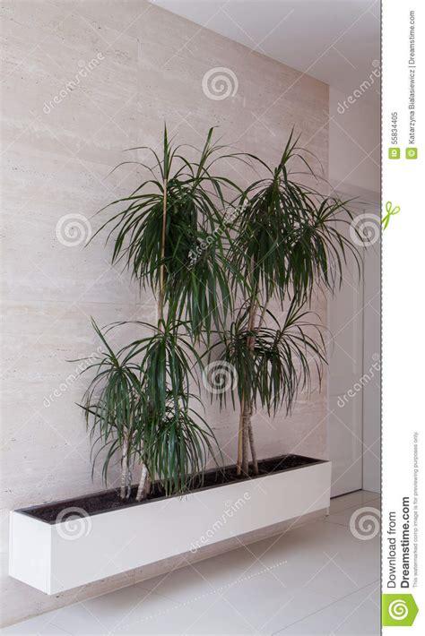 alberi in vaso alberi in vaso da fiori immagine stock immagine di colore