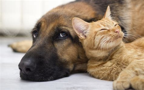 pictures of cats and dogs happy and animals cats and dogs