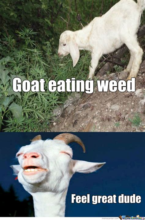 Goat Meme - high goat memes www imgkid com the image kid has it