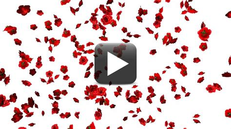 Wedding Flash Animation Free by Animation Motion Petals D Royaltyfree And