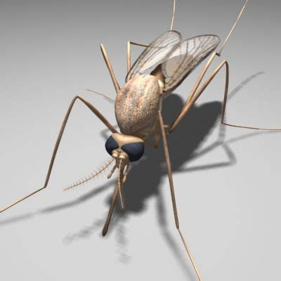 Insect 3d Model Free mosquito insect 3d model